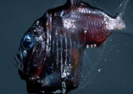 Terrifying Images Of The Ocean That Will Give You Nightmares