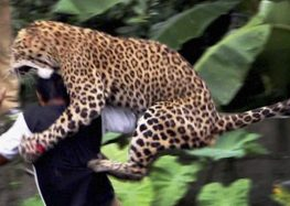 These Shocking Images Show Wild Animals Attacking Humans